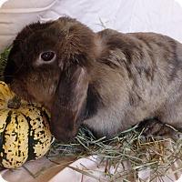 Adopt A Pet :: Colette - Alexandria, VA