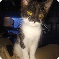 Adopt A Pet :: Leia - Whitehall, PA