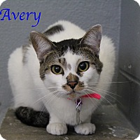 Adopt A Pet :: Avery - Bradenton, FL