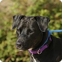 Adopt A Pet :: Sparky - Peace Dale, RI