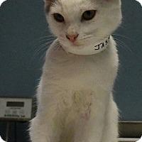 Adopt A Pet :: Jasper - Tomball, TX