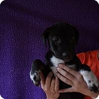 Adopt A Pet :: Dawn - Oviedo, FL