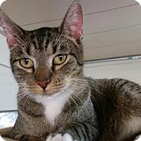 Adopt A Pet :: Yaira - Killeen, TX