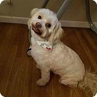 Adopt A Pet :: Wellington - Thousand Oaks, CA