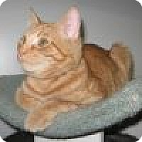 Adopt A Pet :: Cheddar - Powell, OH