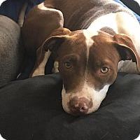 Adopt A Pet :: HAPPY - Williamsburg, VA