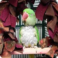 Adopt A Pet :: Jade - Elizabeth, CO