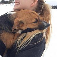 Adopt A Pet :: Cassidy - Park Falls, WI