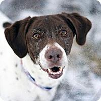 Adopt A Pet :: Chloe - Cheyenne, WY
