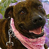 Adopt A Pet :: A great dog waiting for YOU - Sacramento, CA