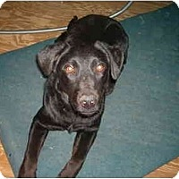Adopt A Pet :: Darby - North Jackson, OH
