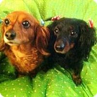 Adopt A Pet :: Sasha - San Jose, CA