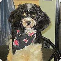 Adopt A Pet :: Checkers - Culver City, CA