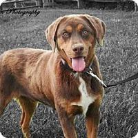 Adopt A Pet :: Mongo - Medora, IN