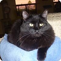 Adopt A Pet :: Felix - Fountain Hills, AZ