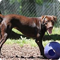 Adopt A Pet :: Anna - Temple, GA