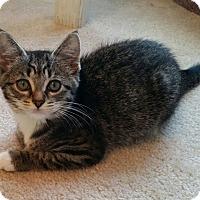 Adopt A Pet :: Corey - Monroe, NC
