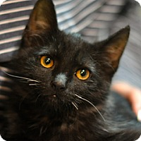 Adopt A Pet :: Eddie Money - Great Falls, MT