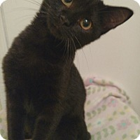 Adopt A Pet :: Auggie (adoption pending) - Richmond, VA