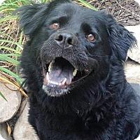 Adopt A Pet :: Hannah - Fennville, MI