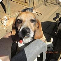 Adopt A Pet :: Toots - Williston Park, NY