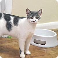 Adopt A Pet :: Stache - Knoxville, TN