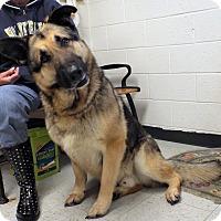 Adopt A Pet :: Jack - Shelby, MI