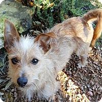 Adopt A Pet :: Dusty - Humble, TX