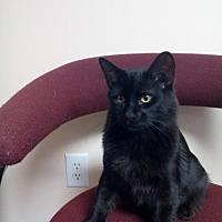 Adopt A Pet :: zz 'Shadow' courtesy listing - Cincinnati, OH