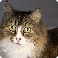 Adopt A Pet :: Azalea - Sarasota, FL