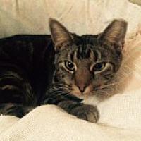 Adopt A Pet :: Skidipper - Delmont, PA