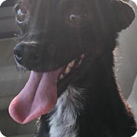 Adopt A Pet :: Pippa - Glendale, AZ