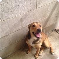 Adopt A Pet :: Harley - Sparta, NJ