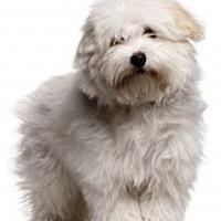 Adopt A Pet :: JOLIE - DeLand, FL
