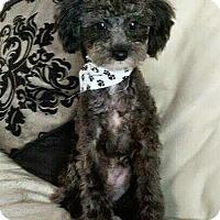 Adopt A Pet :: Julian - House Springs, MO