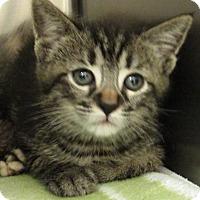 Adopt A Pet :: Nala - Windsor, VA