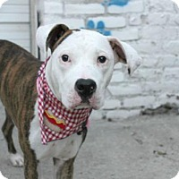 Adopt A Pet :: Jackson - Manhattan, NY