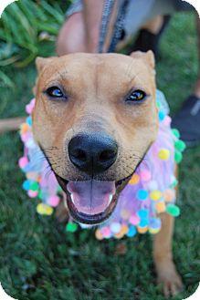 Terrier (Unknown Type, Medium) Mix Dog for adoption in Sawyer, North Dakota - Hope