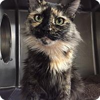 Adopt A Pet :: Phoebee - Chico, CA