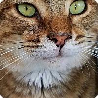 Adopt A Pet :: Jackson - Akron, OH