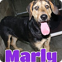 Adopt A Pet :: #219 Marly - Lawrenceburg, KY