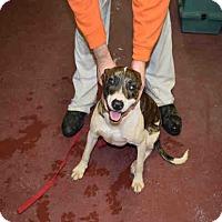 Adopt A Pet :: Bliss - Newnan City, GA