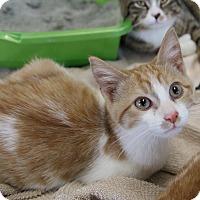 Adopt A Pet :: Hot - Rochester, MN