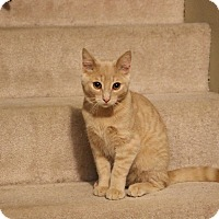 Adopt A Pet :: Tigger - Lindsay, ON