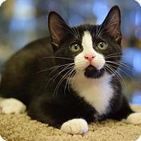 Adopt A Pet :: Jarvis - DFW Metroplex, TX