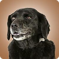 Adopt A Pet :: Toasty - Prescott, AZ