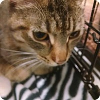 Adopt A Pet :: Marcie - South Bend, IN
