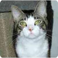 Adopt A Pet :: Dakota - Arlington, VA