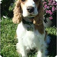 Adopt A Pet :: Bodie - Sugarland, TX