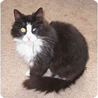 Adopt A Pet :: Juliet - San Ramon, CA